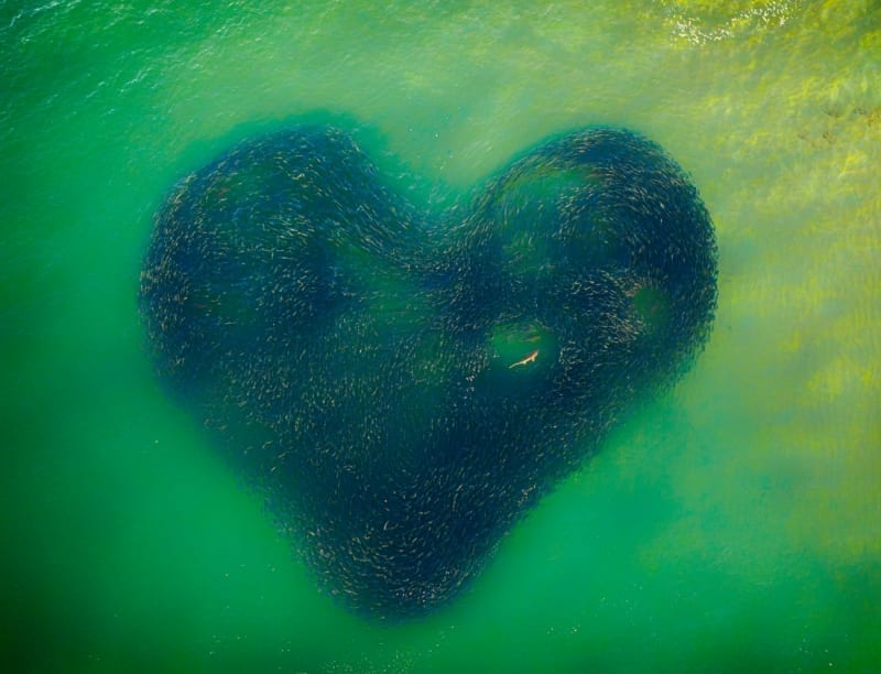 Love Heart of Nature
